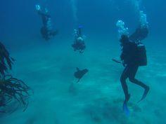 Kelp Forest, Shipwreck, Cape Town, Scuba Diving, Seals, Underwater, Fur, World, Animals