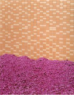 "Takashi Yasumura // ""Things in a place"""
