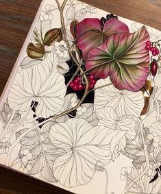 36 Ideas For Doodle Art Flowers Sketchbooks Watercolor Flowers, Watercolor Art, Drawing Flowers, Illustration Botanique, Coloring Book Art, Adult Coloring, Colored Pencil Techniques, Colouring Techniques, Drawing Techniques