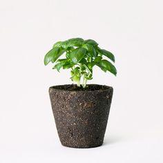 大自然の地層をそのまま抜き取ったようなユニークなプランターです。特殊左官職人の熟練の技によって 陶器にはがれやすい土を均等に塗り込むことで、プロダクト然とした佇まいを実現しています。<br> 種は バジル、ミニキャロット、ワイルドストロベリーの3種類の中からお選びいただくことができます。お好きな植物を飾って、植物と大地のありのままの姿をお楽しみください。
