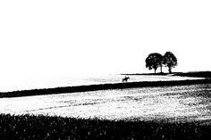 silence - A horse rider rides alone in a landscape. On the horizon two trees with a crucifix in the middle. Abstract street photography in black and white. #photography #blackandwhite #landscape #fineart #abstract #horse