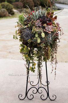 Hanging basket of succulents #containergardeningideassucculents #containergardeningideashangingbaskets