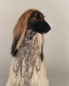 And we thought an Afghan Hound couldn't get more fabulous #doginbling #luxedog