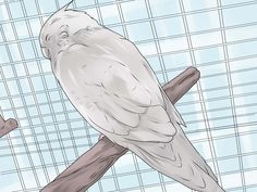 How to Keep Your Cockatiel Happy -- via wikiHow.com