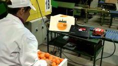 Comprar Naranjas en Naranjas King