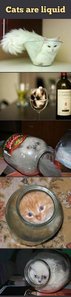 Scientific proof that cats are liquids…