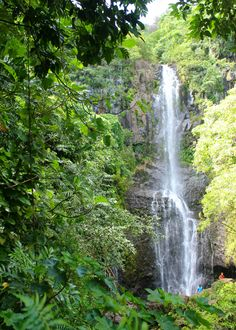 Hawaii Travel Tips   Scenic drive on the Road to Hana