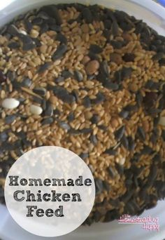 The animals you are raising on your homestead need to have a certain type of food. You can easily save some money by making your own homemade chicken feed.
