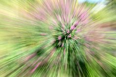 Zoom Bursting Exposure Photography, Photography Tips, Try Something New, Shots, Flowers, Plants, Photo Tips, Flora, Plant