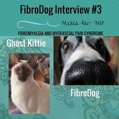 FibroDog interviewed his first cat!  | Medea Karr FNP | A Resource Site for Fibromyalgia & Myofascial Pain Syndrome