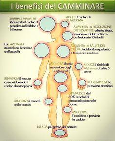 #camminare 30 minuti al giorno è meglio che fare 2 ore di #palestra follow http://ift.tt/1rtfGy9
