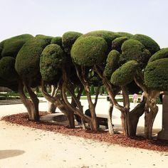 Sculped trees, Parque del Retiro, Madrid. #aliving #inspiringnature #nature #elretiropark #madrid #travel #travelinspiration