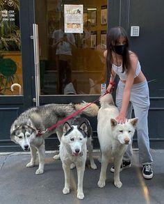 Cute Creatures, Beautiful Creatures, Fluffy Animals, Cute Animals, Baby Animals, Pets 3, Girls Anime, Kawaii, Dog Mom