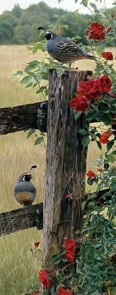 """""""Finch, Fence and Flowers"""" (by artist Terry Isaac): Those birds are quail. Note by Roger Carrier, or Is """"finch"""" another name for quail? Pretty Birds, Love Birds, Beautiful Birds, Animals Beautiful, Cute Animals, Kinds Of Birds, Tier Fotos, Colorful Birds, Fauna"""