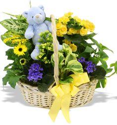 Baby Boy Garden at Stadium Flowers for $74.98