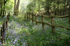 viaTumblr - Thorncombe Woods, Puddletown, Dorset,England #fence