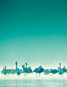 pink is beautiful, yes. but turquoise is the perfect match. ------ Fun Colorful Flamingos ~ inc. Verde Tiffany, Azul Tiffany, Bleu Turquoise, Aqua Blue, Shades Of Turquoise, Shades Of Blue, Beautiful Birds, Beautiful World, Simply Beautiful