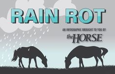 Learn about this frustrating, contagious equine skin disease and how to prevent its spread.
