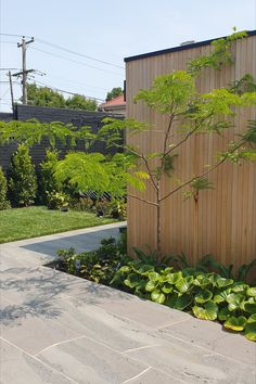 Gleditsia against Silver Top ash radial timber shed Silver Tops, Ash, Garage Doors, Outdoor Decor, Garden, Plants, Projects, House, Home Decor