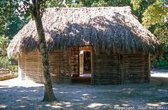Hut Dwelling | Traditional Mayan thatched roof house or NA, Quintana Roo, Mexico