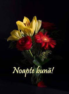 Good Night, Floral, Plants, Beauty, Nighty Night, Florals, Planters, Beauty Illustration, Good Night Wishes