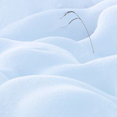 Snowscapes Photography Tours, Photography Workshops, Photography Website, Fine Art Photography, Shape, Gallery, Artist, Art Photography, Amen