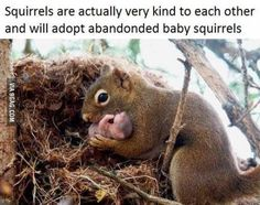 Faith in squirrel humanity restored