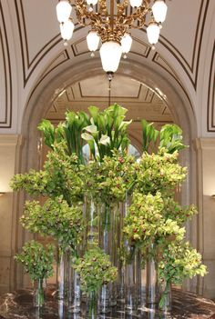 Abundant collection of orchids in the Palace Hotel, a Luxury Collection Hotel lobby.