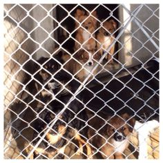 HUGE FAMILY DUMPED AT SB CITY SHELTER #A461957 through #A461962 2 adult female cocker/pom mixes and their 4 13 week old puppies Available 3/11/14. Can be adopted separately City of San Bernardino, CA Animal Control https://www.facebook.com/photo.php?fbid=10202211135777417&set=a.4000741974526.2147483.1160364024&type=1&theater
