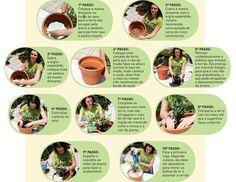 Cultivando árvores frutíferas em vasos   Blog da Giacomelli