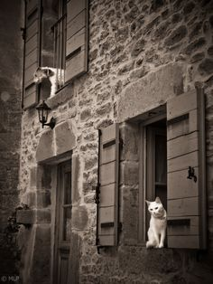 Awesome. I love everything about this photo. The dog reminds me of Conrad a little bit and the kitty resembles Thumper. Did I mention the STONE? I LOVE old stone! ♡