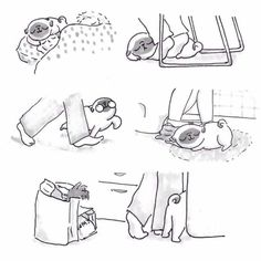 Life with a pug ;)