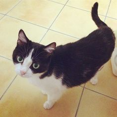 #tetothecat #cat #blackandwhite  #愛猫 #テト  #白黒 #猫 #ネコ #ねこ #おやすみなさい  #bonnesoiree #bonnenuit #chat #noietblanc #goodnight