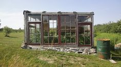 My father built this greenhouse with salvaged windows and wood from abandoned crumbling barns and our forest.  He built the foundation with handmade cement and rocks from our property.  It is perfect for growing tomatoes in our maritime climate.