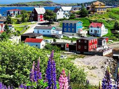Trinity, a perfect little quaint town on our beloved Bonavista Peninsula. (Submitted by Mark Gray) Holiday Places, Newfoundland And Labrador, Canada, True North, The Province, Ireland Travel, Culture Travel, Rug Hooking, Lighthouses