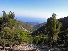 Simis forest in Crete