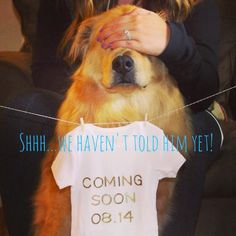 That's a big secret to keep! Laura from  Happily Ever Parker  had this adorable idea for including the family dog, Finn, in her pregnancy announcement. We won't tell if you won't!