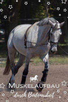Animals And Pets, Funny Animals, Natural Horsemanship, Othello, Diy Hacks, Horse Training, Clothes Horse, Cross Country, Napoleon