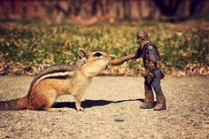 Chipmunk takes almond from Chewbacca.
