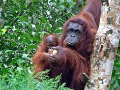 Free Image, Free Photo, Monkey, Baby Monkey, Wildlife, Nature, Fauna, Animals
