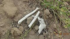 Restos óseos. Hallado a lado de un pozo de huaquero. Zona Arqueológica Huaca Las Gemelas.