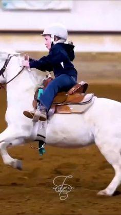 Cute Baby Horses, Pretty Horses, Beautiful Horses, Animals Beautiful, Funny Horse Videos, Funny Horses, Funny Animal Videos, Horse Girl, Horse Love