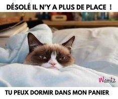 I love grumpy cat lol Funny Grumpy Cat Memes, Funny Cats, Funny Animals, Funny Memes, Hilarious, Grumpy Cats, Funny Sleep, Jokes, Funniest Animals