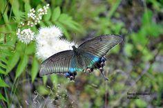 Бабочкино летнее настроение - Мое Настроение - социальная сеть для тех кому хорошо