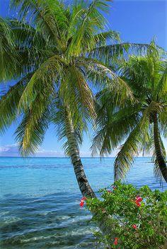 Lagoon - Moorea, French Polynesia