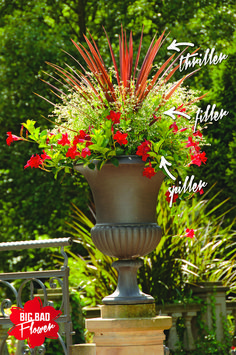 Thriller, Filler, Spiller Container Garden Design Concept - Explained!          Create a stunning container garden with little design knowledge by following our thriller, filler, spiller concept.     http://picturesfunnys.blogspot.com/