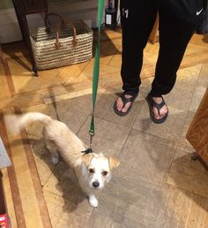 This is Percy who visited our New Haven store today So CUTE! Woofs of Walker Loden.