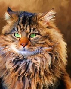 Maine coon cat  I can't tell if this is a painting or a picture.  He reminds me of the Lion from the Wizard of Oz!
