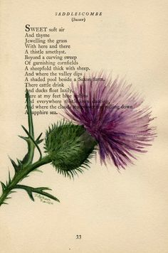 Thistle -  Original Watercolor Painting  by Julia Raven - on Antique Book page - 5x8inches
