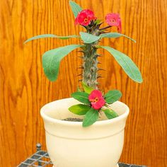 Top 10 Succulent Plants for the Home